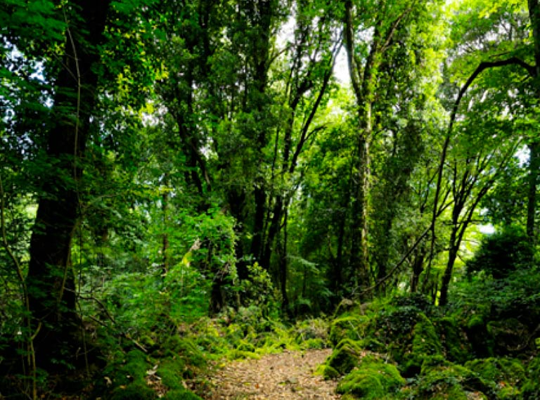 Forestazione con Mosaico Verde